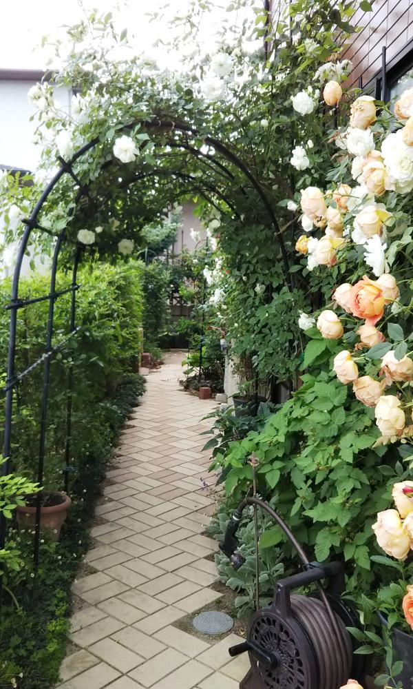 福岡のバラの庭
